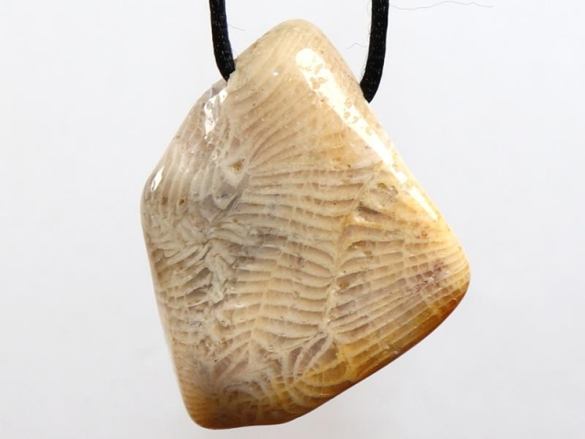 Fossilized coral on cord - f.e. leather cord (necklace)