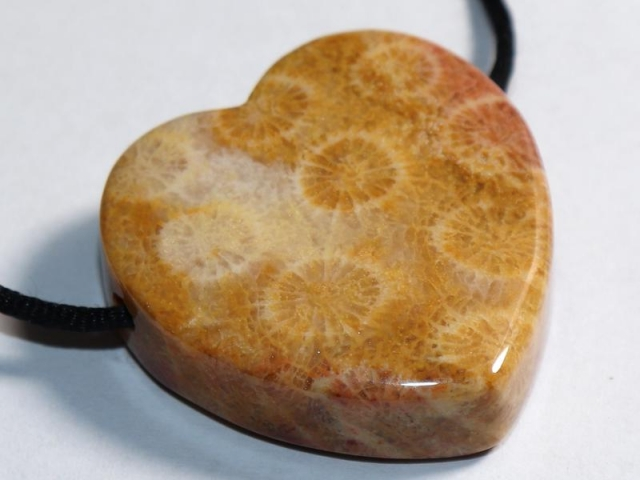 Fossilized coral on cord